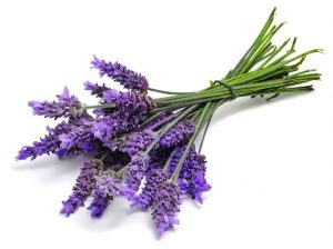 Lavender for productivity