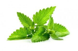 Can peppermint help with productivity, peppermint and productivity
