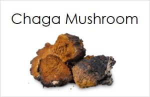 Chaga mushrroms containing immune boosting nutrients.